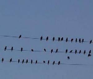 crow bars