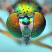 A Mix Tape of Songs From The Perspective of a Fly. Update.