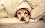 11.12.14-Pets-Who-Just-Cant-Be-Bothered-to-Get-Out-of-Bed9